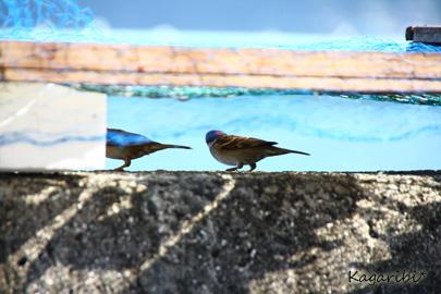 bird10a.jpg