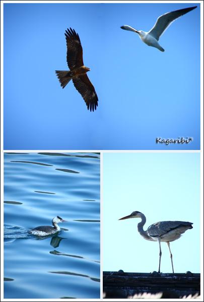 bird10c.jpg