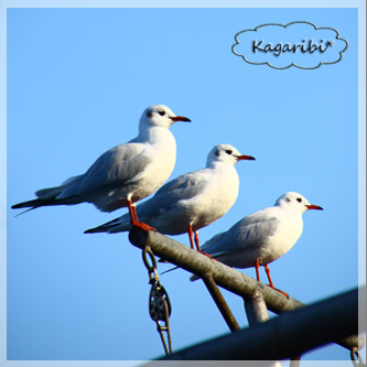bird10d.jpg