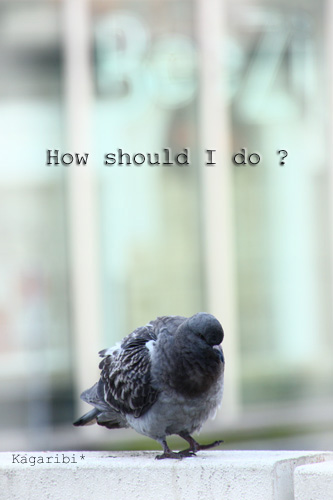 bird11a.jpg