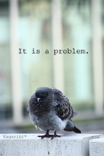 bird11b.jpg
