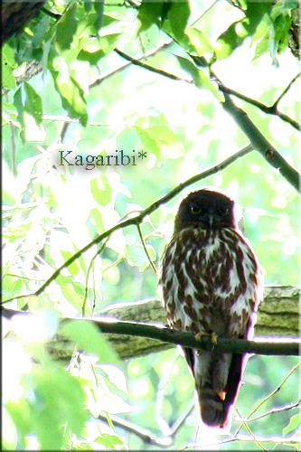 bird15b.jpg