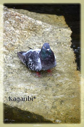 bird16b.jpg