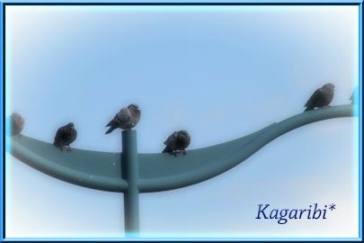 bird22b.jpg