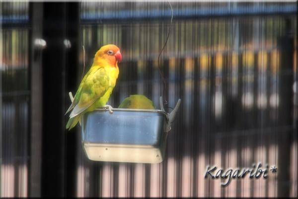bird25h.jpg