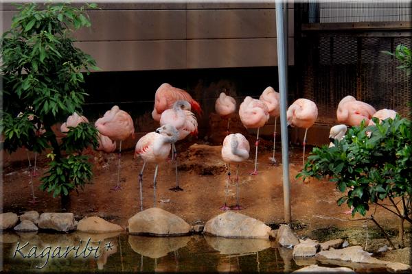 bird26a.jpg