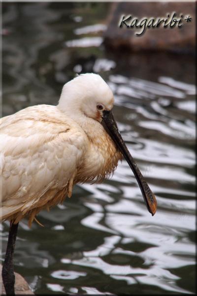bird26b.jpg