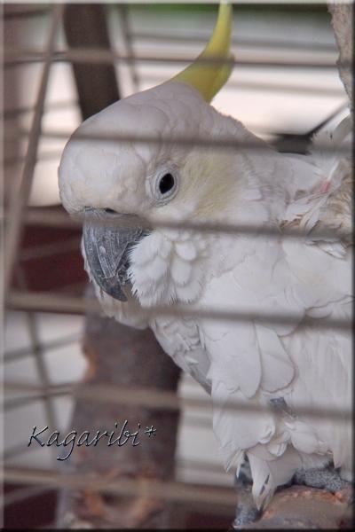 bird26d.jpg