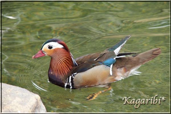 bird27c.jpg