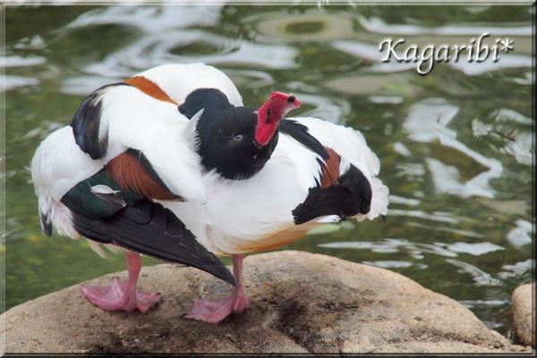 bird27f.jpg