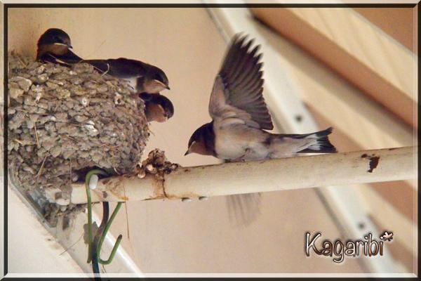 bird28a.jpg