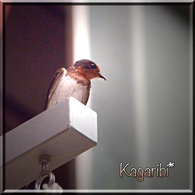 bird28b.jpg