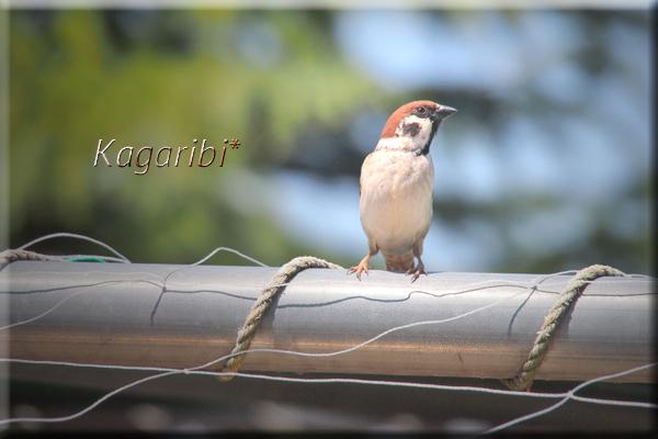 bird29a.jpg