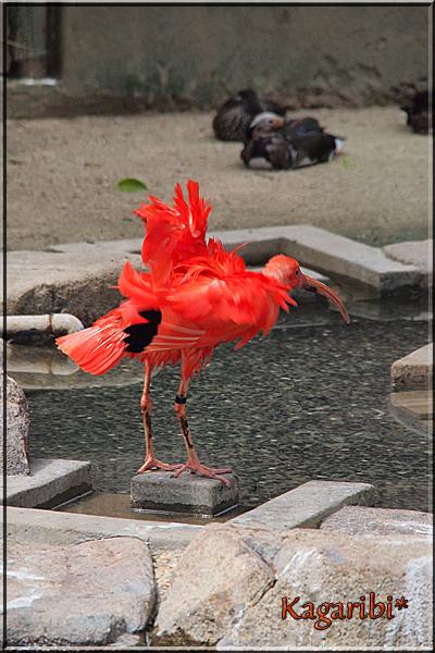 bird30b.jpg