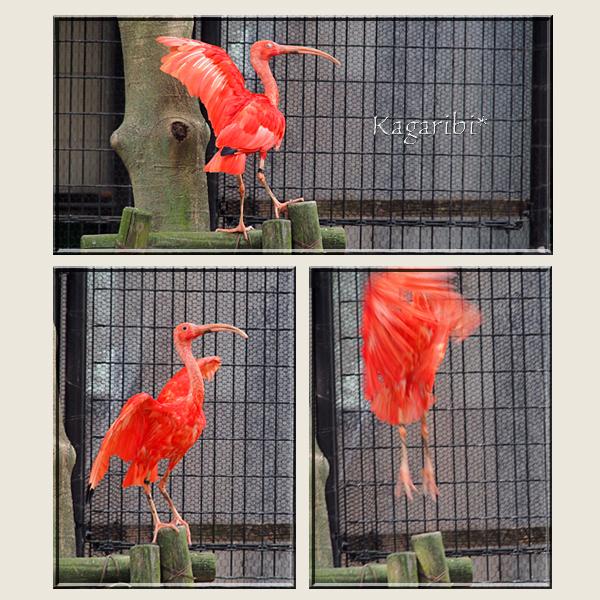 bird30c.jpg