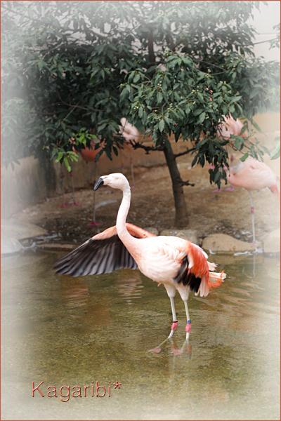 bird31a.jpg