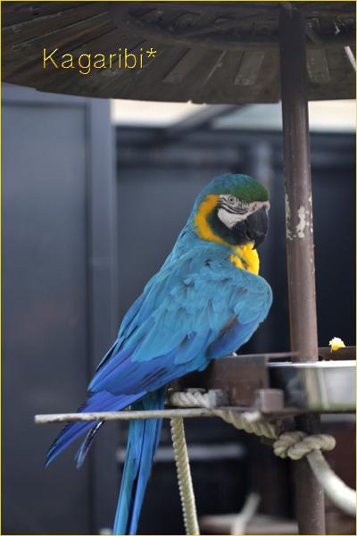 bird31b.jpg