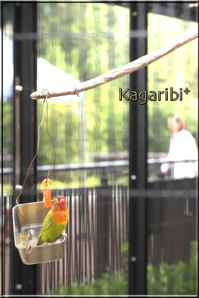 bird32a.jpg