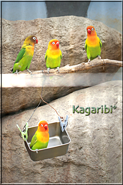 bird32b.jpg