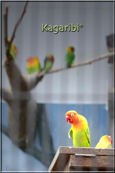 bird32c.jpg