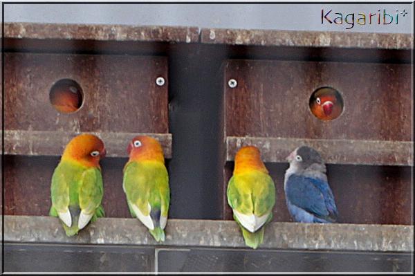 bird32d.jpg