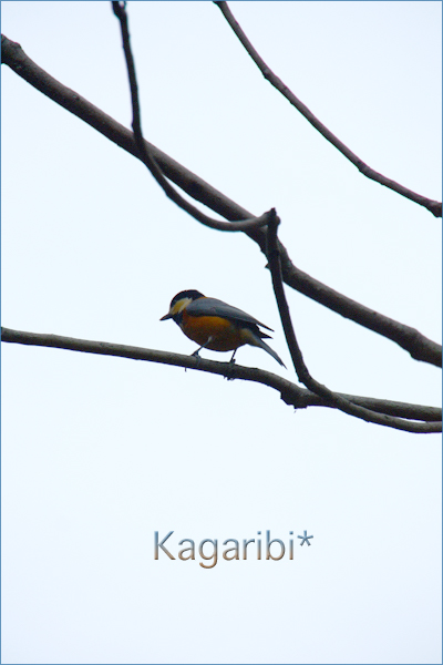bird36a.jpg