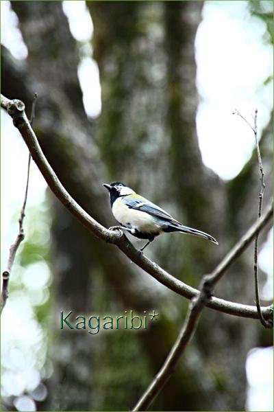 bird36b.jpg