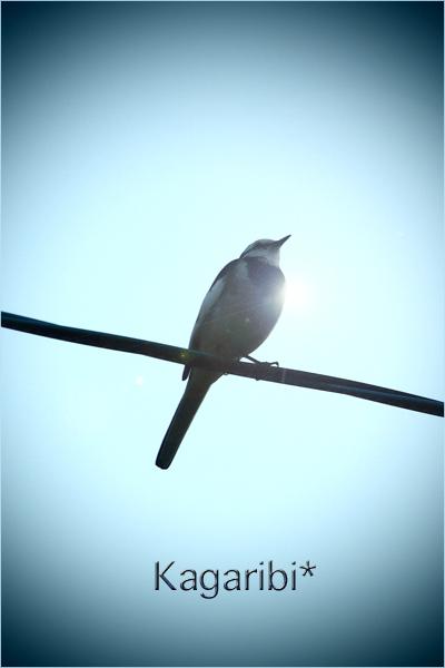 bird36c.jpg