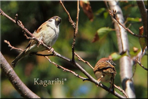 bird37b.jpg
