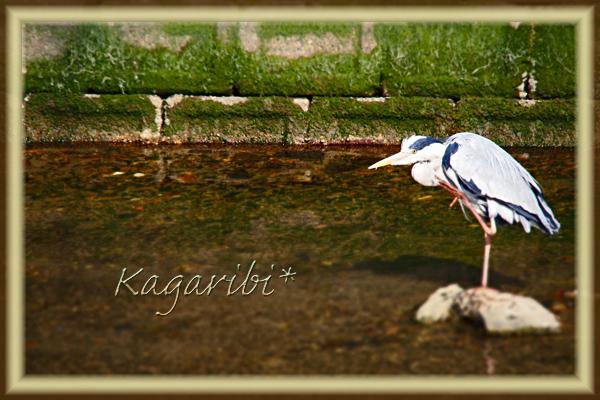 bird38a.jpg