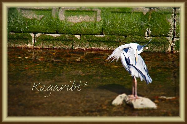 bird38b.jpg