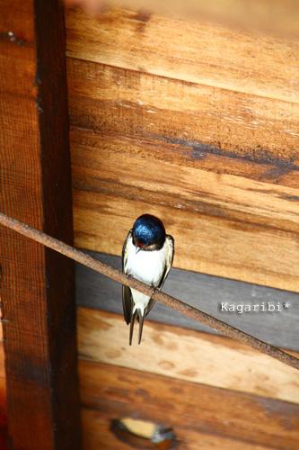bird6b.jpg