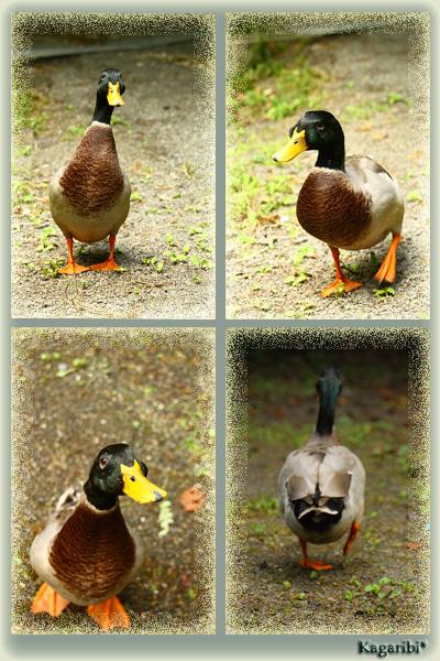 bird9a.jpg