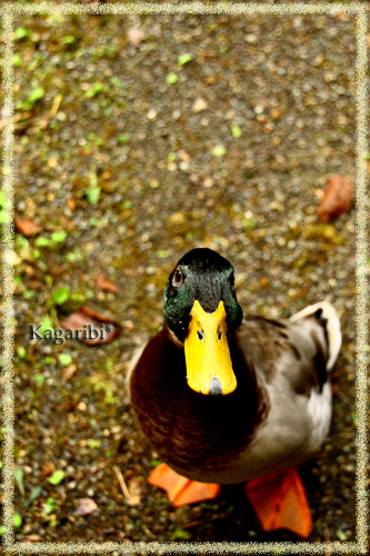 bird9c.jpg