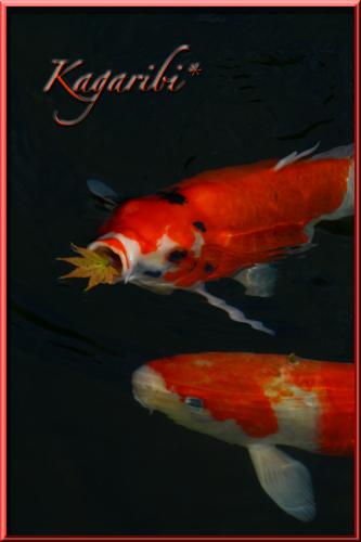 fish10a.jpg