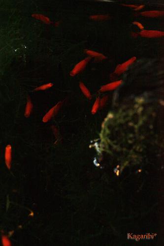 fish1b.jpg