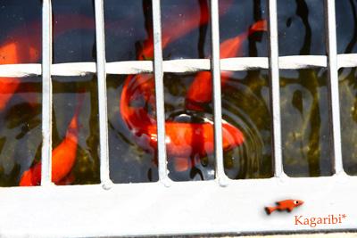 fish2a.jpg