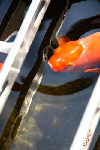 fish2b.jpg