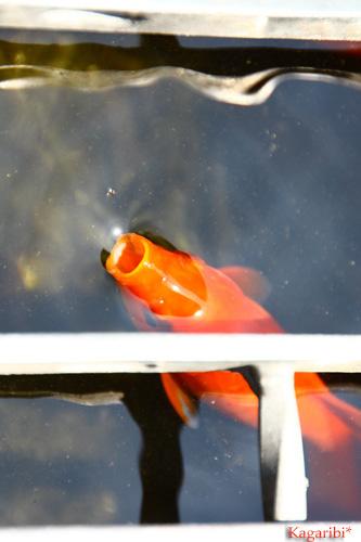 fish2d.jpg