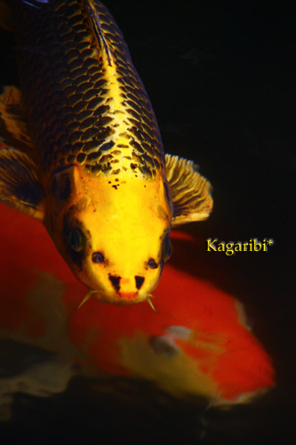 fish3a.jpg