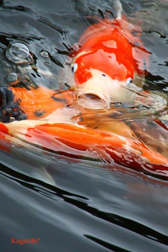 fish3b.jpg