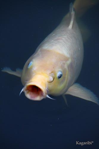 fish3c.jpg