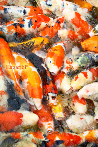 fish3d.jpg