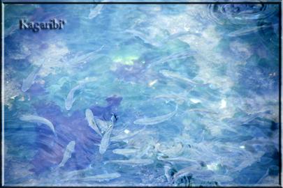 fish4b.jpg