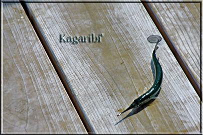 fish6b.jpg