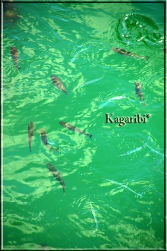 fish6c.jpg