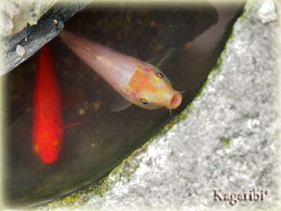 fish7a.jpg