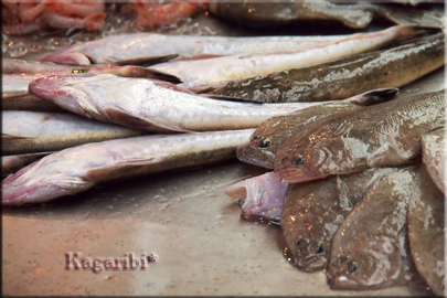 fish8b.jpg