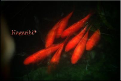 fish8c.jpg