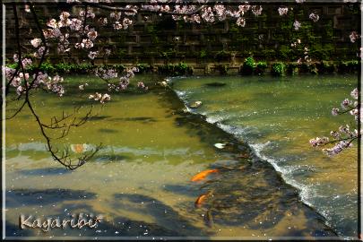 fish9a.jpg